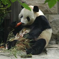 panda(進藤 寿雄)